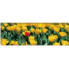 <strong>iCanvasArt</strong> Yellow Tulips in a Field Canvas Wall Art