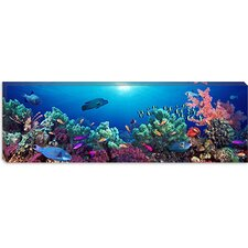 <strong>iCanvasArt</strong> School of Fish Swimming Near a Reef, Indo-Pacific Ocean Canvas Wall Art