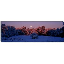 <strong>iCanvasArt</strong> Snow Covered Forest at Dawn, Denver, Colorado Canvas Wall Art
