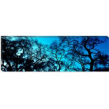 <strong>iCanvasArt</strong> Silhouette of an Oak Tree, Oakland, California Canvas Wall Art