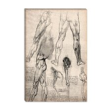 """Sketchbook Studies of Human Legs"" Canvas Wall Art by Leonardo da Vinci"