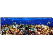 <strong>iCanvasArt</strong> School of Fish Swimming Near a Reef Canvas Wall Art