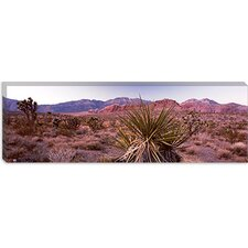 <strong>iCanvasArt</strong> Yucca Plant in a Desert, Red Rock Canyon, Las Vegas, Nevada Canvas Wall Art