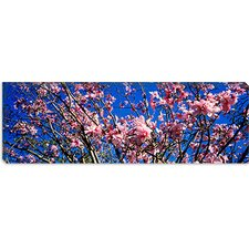 <strong>iCanvasArt</strong> Magnolias, Golden Gate Park, San Francisco, California Canvas Wall Art