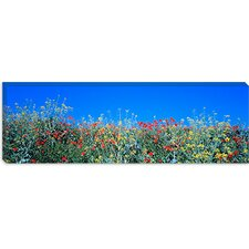 <strong>iCanvasArt</strong> Poppy Field Tableland N Germany Canvas Wall Art