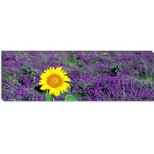 <strong>iCanvasArt</strong> Lone Sunflower in Lavender Field, France Canvas Wall Art
