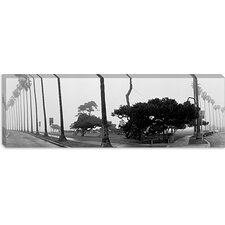 <strong>iCanvasArt</strong> Palm Trees and Fog, San Diego, California Canvas Wall Art
