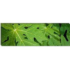 <strong>iCanvasArt</strong> Raindrops on Papaya Tree Leaves, La Digue, Seychelles Canvas Wall Art