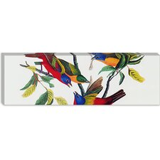 """Painted Bunting (Panoramic)"" Canvas Wall Art by John James Audubon"