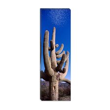 <strong>iCanvasArt</strong> Saguaro National Park, Tucson, Arizona Canvas Wall Art