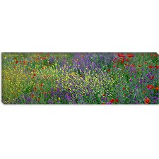 <strong>iCanvasArt</strong> Wildflowers El Escorial Spain Canvas Wall Art