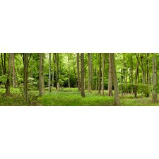 <strong>iCanvasArt</strong> Spring in Thetford Forest, Norfolk, England Canvas Wall Art