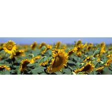 <strong>iCanvasArt</strong> California, Central Valley, Field of Sunflowers Canvas Wall Art