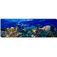 <strong>iCanvasArt</strong> Stoplight Parrotfish with a Hawksbill Turtle Canvas Wall Art