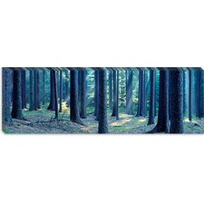 <strong>iCanvasArt</strong> Trees in a Forest, South Bohemia, Czech Republic  Canvas Wall Art