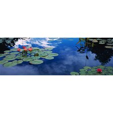 Water Lilies in a Pond, Denver Botanic Gardens, Denver, Denver County, Colorado Canvas Wall Art
