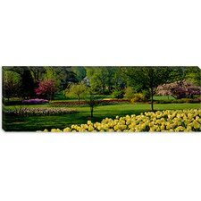 <strong>iCanvasArt</strong> Tulip Flowers in a Garden, Sherwood Gardens, Baltimore, Maryland Canvas Wall Art