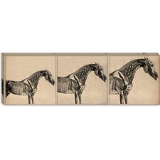 "<strong>iCanvasArt</strong> ""The Anatomy of The Horse Collage"" Canvas Wall Art by George Stubbs"