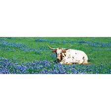 <strong>iCanvasArt</strong> Texas Longhorn Cow Sitting on a Field, Hill County, Texas Canvas Wall Art