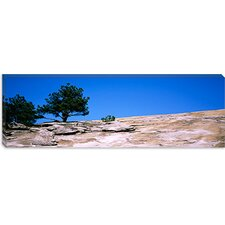 Trees on a Mountain, Stone Mountain, Atlanta, Fulton County, Georgia Canvas Wall Art