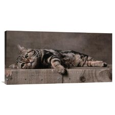'American Shorthair Brown Patched Tabby Cat' by Yann Arthus-Bertrand Photographic Print on Canvas