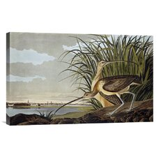 'Male and Female Long Billed Curlew' by John James Audubon Graphic Art on Canvas