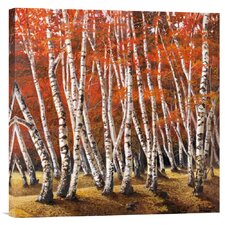 'Bosco di Betulle I' by Adriano Galasso Painting Print on Canvas