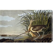'Male and Female Long Billed Curlew' by John James Audubon Stretched Canvas Art