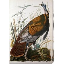 'Wild Turkey, Male' by John James Audubon Stretched Canvas Art