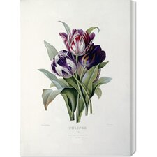 'Tulips' by Pierre Joseph Redoute Stretched Canvas Art