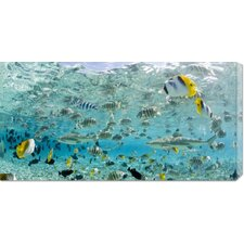 <strong>Bentley Global Arts</strong> 'Blacktip Sharks and Tropical Fish in Bora-Bora Lagoon' by Michele Westmorland Stretched Canvas Art
