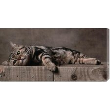 <strong>Bentley Global Arts</strong> 'American Shorthair Brown Patched Tabby Cat' by Yann Arthus-Bertrand Stretched Canvas Art
