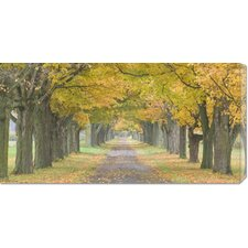 <strong>Bentley Global Arts</strong> 'Country Road Lined by Trees in Autumn' by Owaki-Kulla Stretched Canvas Art