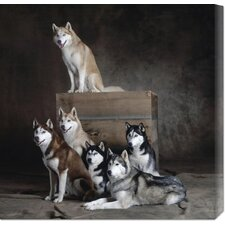 <strong>Bentley Global Arts</strong> 'Siberian Huskies (detail)' by Yann Arthus-Bertrand Stretched Canvas Art