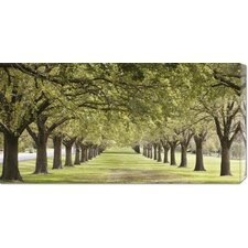<strong>Bentley Global Arts</strong> 'Rows of Trees Bordering Greensward (detail)' by Ocean Images Stretched Canvas Art
