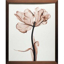 'Parrot Tulip I' by Steven N. Meyers Framed Photographic Print