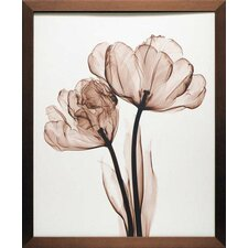 'Parrot Tulip II' by Steven N. Meyers Framed Photographic Print