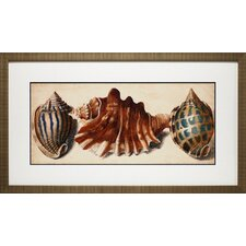 <strong>North American Art</strong> Shell Trio II Wall Art