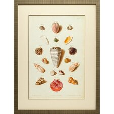 <strong>North American Art</strong> Muller Shells III Wall Art