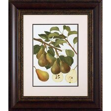 <strong>North American Art</strong> Pear Varieties III Wall Art