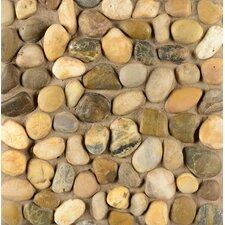 Hemisphere Pebble Stone Polished Mosaic Tile in Kona Sands
