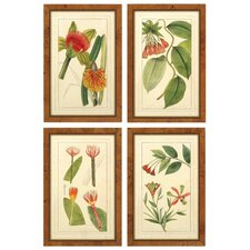 Rachel's Tropicals Framed Graphic Art
