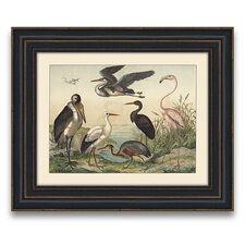 <strong>Epic Art</strong> Avian Hue Beautiful Birds IV Wall Art
