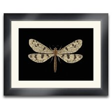 <strong>Epic Art</strong> Beauté Ailé Turbin Dragonfly II Wall Art