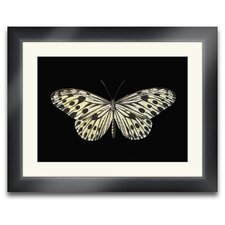 Beauté Ailé Lloyd Butterfly I Framed Photographic Prints