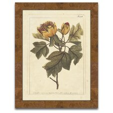 The Botanist's Measure Autumn Weinmann VIII Framed Graphic Art
