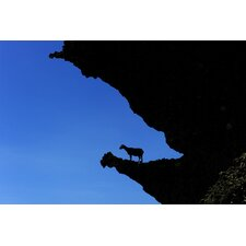 Goat on Lanyu Photographic Print on Canvas