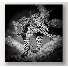 Leopard Photographic Print on Canvas