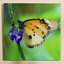Butterfly Design Wall Decor