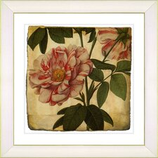 Vintage Botanical No. 49A by Zhee Singer Framed Giclee Print Fine Wall Art